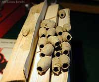 Aiuto un nido d 39 api strane - Nido api finestra ...